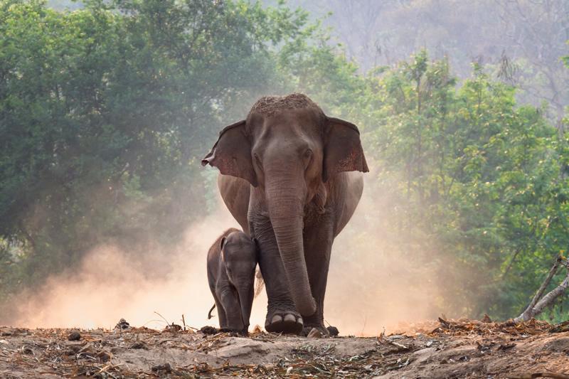 A retirement home for elephants? Elephant sanctuaries in Thailand