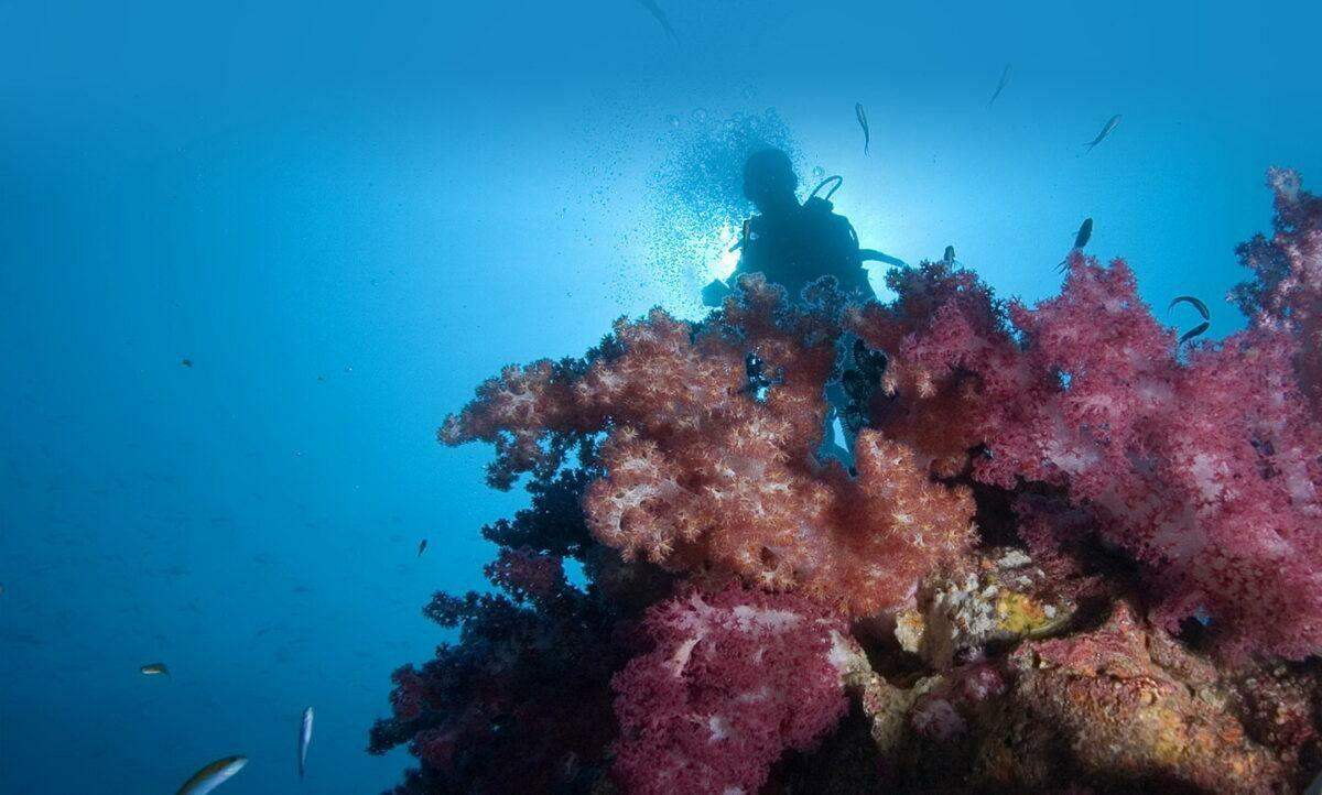 Sustainable sunscreen: what does sun protection have to do with corals?