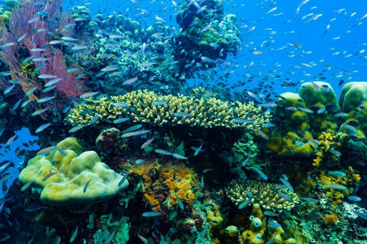 Coral reefs © Zeavola
