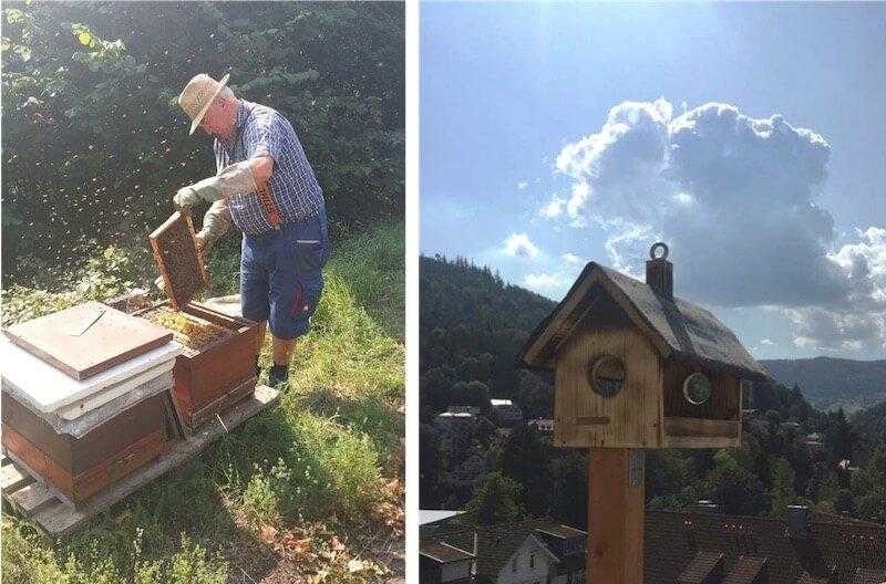 Bee hives and bird house © SCHWARZWALD PANORAMA