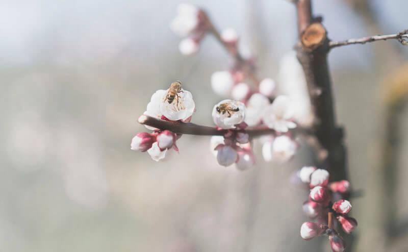 Lively garden: preserving biologic diversity