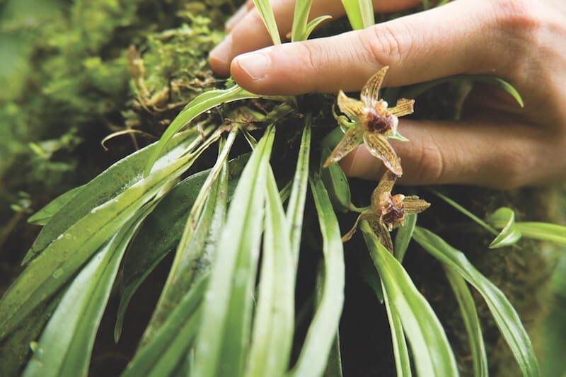 Native orchid in Peru © Inkaterra Machu Picchu Pueblo Hotel