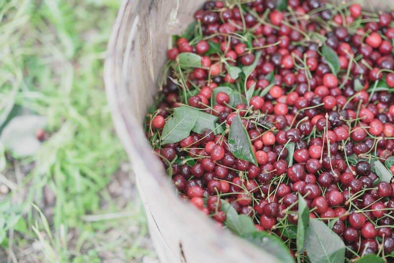 Home-grown, organic cherries © i pini
