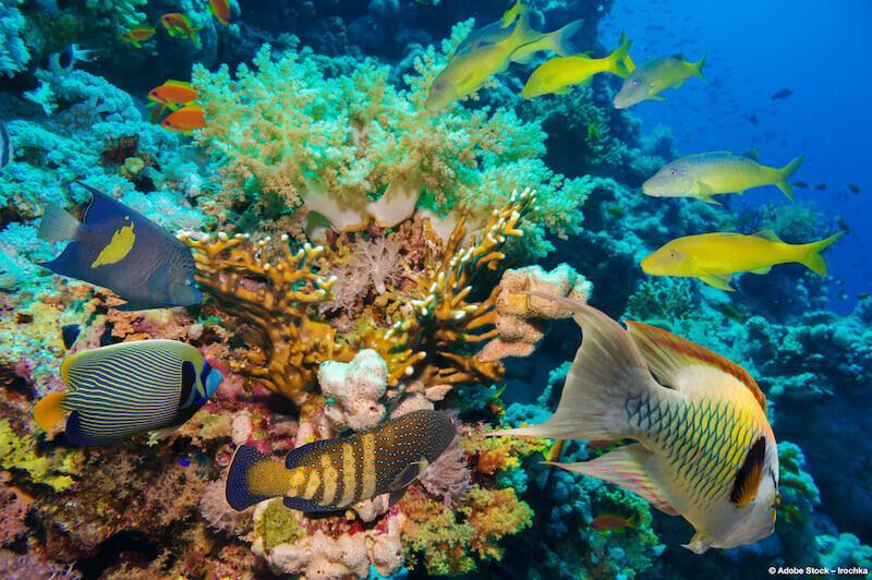 Sustainable diving holiday: three breathtaking places